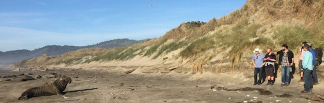 An elephant seal at Ano Nuevo and the winter 2015 Environmental Ethics class